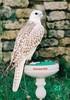 Птицы питомника