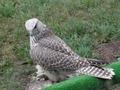 Птицы 2011