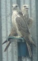 Птицы 2012