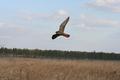 Питомник диких птиц «Галичья гора»