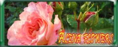 AlenaFlowers