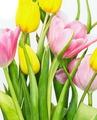 Милые дамы! С праздником Весны Вас!