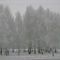 В город пришла зима