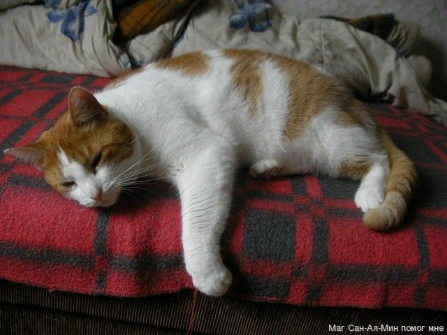 Котик Фрай болен - пусть выздоровеет и больше никогда не болеет!