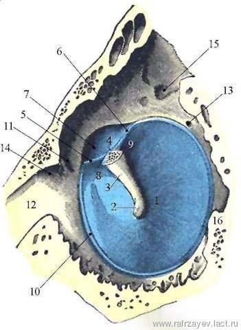 Təbil zarının topoqrafiyası