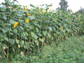 Природа и виды села