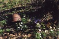 Солдатская каска найдена 8 мая 2013 г. рядом с фронтовой дорогой у Волыни
