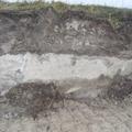 Таков состав почвы у пруда