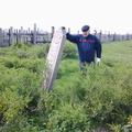 Белхи на кладбище