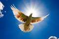 В Чеченской Республике празднуют День мира - годовщину отмены режима КТО