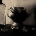 http://www.enamelab.ru/photography_anastasia-alexandrova