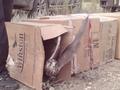 Выпуск 11 соколов балобанов в Оренбургском заповеднике