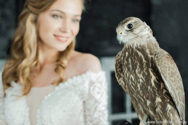 Аренда птиц на фото и видеосъемку