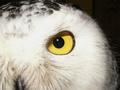 Фотографии ночных хищников
