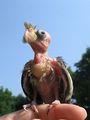 Смешные фотографии птиц