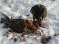 Соколиная охота/Falconry hunt