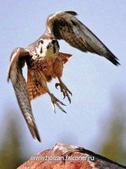 Сначала мы птиц уничтожаем, а потом беремся спасать…