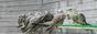 Russian auction of birds of prey, falconry, hawking, hawks, golden eagles,  gyr falcon, saker falcons. купить продать сокола, ястреба, беркута, соколиная охота