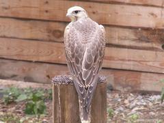"Центр по мониторингу и реабилитации хищных птиц ""Холзан"""