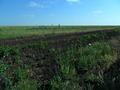 Залет саранчовых с приграничных районов Казахстана