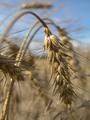 24.09.2010 года Пресс-конференция в Министерстве сельского хозяйства Саратовской области
