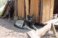 Собаки приюта