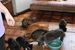 Кошки приюта