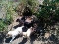 Всемирный день бездомных животных в Улан-Удэ отметят акцией «День стольника»
