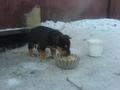 маленькие щенки на ул.Борсоева