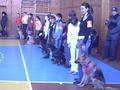 Парад участников дог-шоу