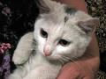 беленькие котята