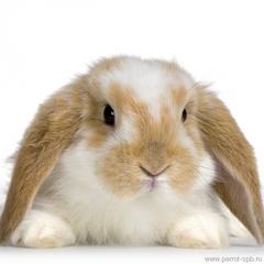 Кролики. Общая информация