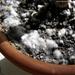 Болезни растений,почвы и  все,что с этим связано