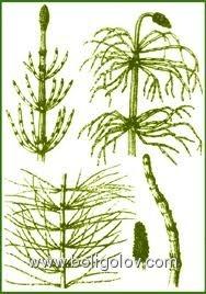 какие травы помогут избавиться от паразитов