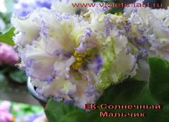 Фиалки Коршуновой (ЕК-)