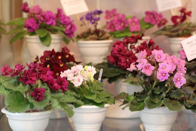 Выставка в Доме фиалки, Москва, апрель 2012