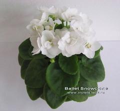 Ballet Snowcone