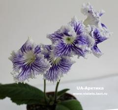 UA-Арктика