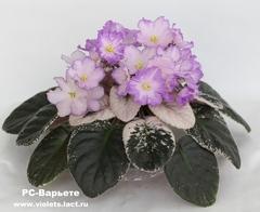 РС-Варьете
