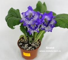 Grand (7010)
