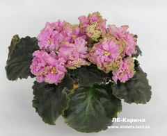 ЛЕ-Карина