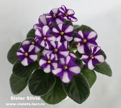 Sister Silvia