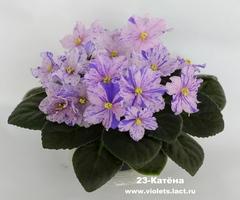 23-Катёна
