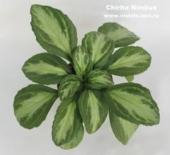 Chirita Nimbus