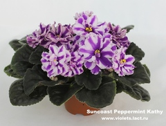 Suncoast Peppermint Kathy