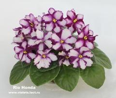 Rio Honda