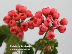 Patricia Andrea