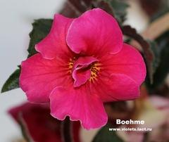 Boehme