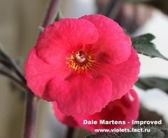 Dale Martens-Improved
