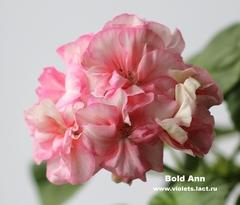 Bold Ann